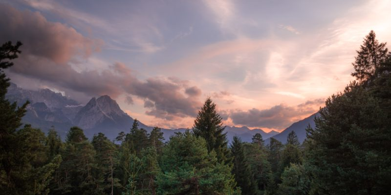 pine trees with mountain range in the background